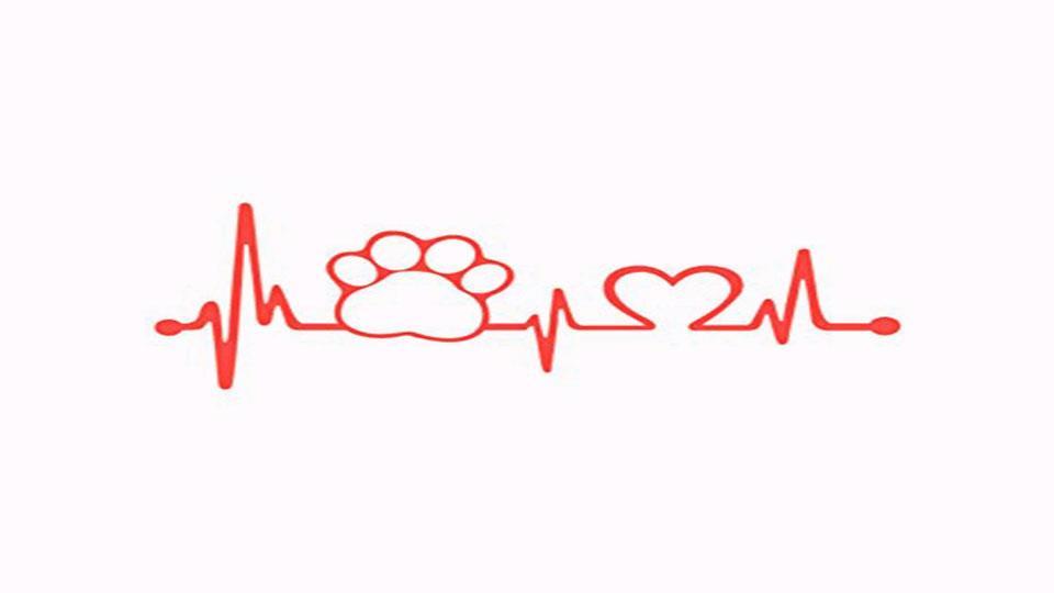 servicios veterinarios en Reus cardiólogia