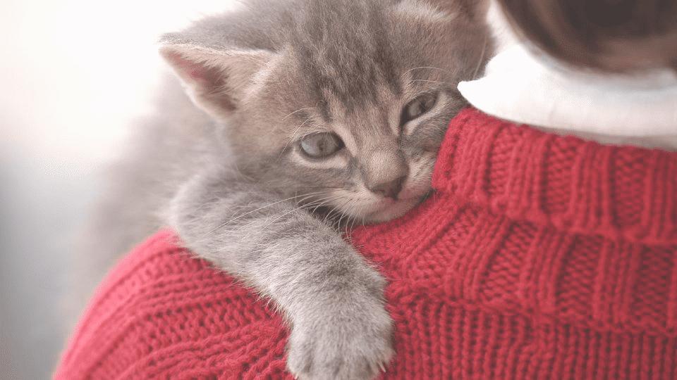clínica veterinaria en Reus Tarragona cuidado de gatos