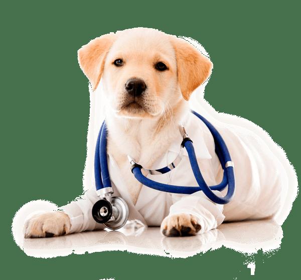 clínica veterinaria en Reus Tarragona cuidadod e perros  Reus Vet
