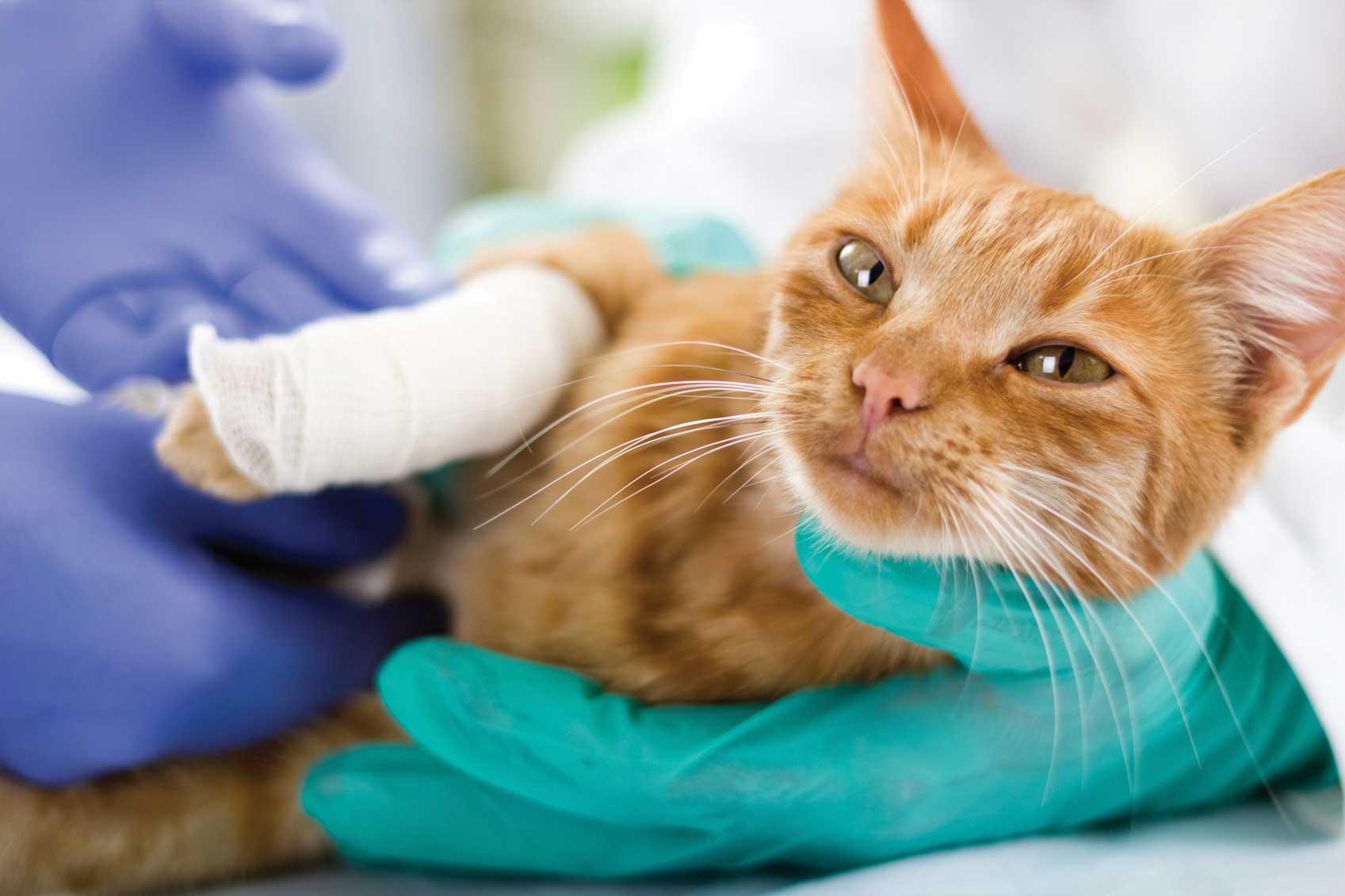 cuidado de gatos en reus clínica veterinaria Reus VEt