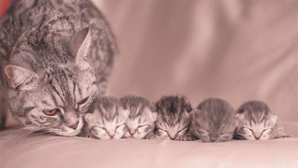 servicios veterinarios en Reus reproducción