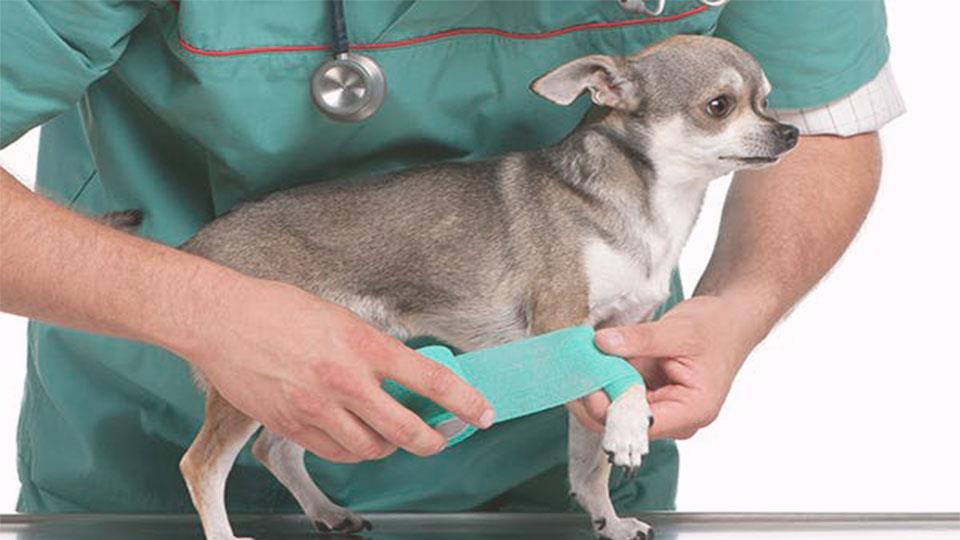 traumatología mascotas en Reus