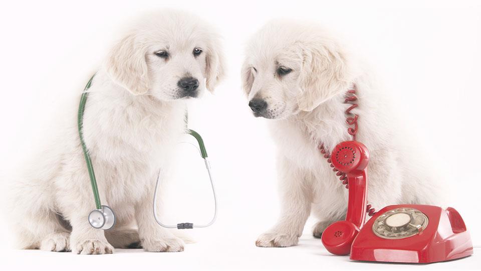servicios veterinarios en Reus urgencias