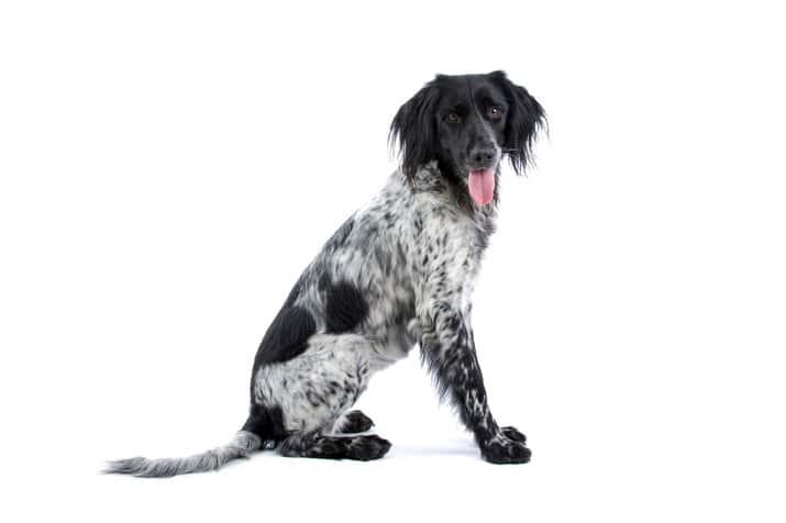 esterilizacion de perras en Reus