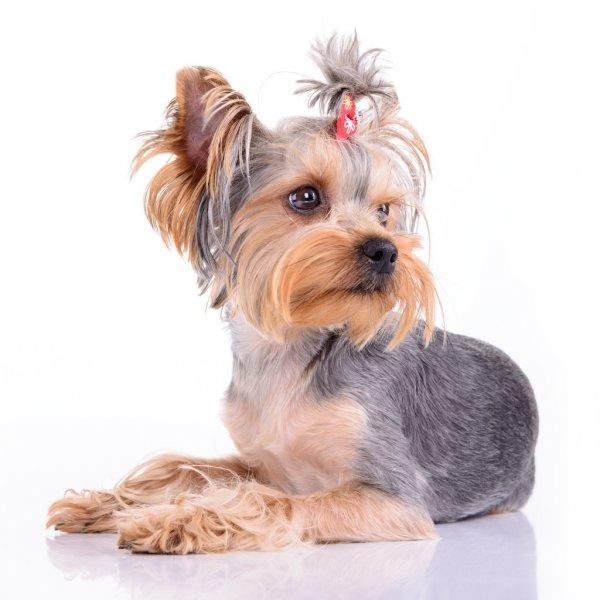 peluquería canina en reus peluquería para mascotas